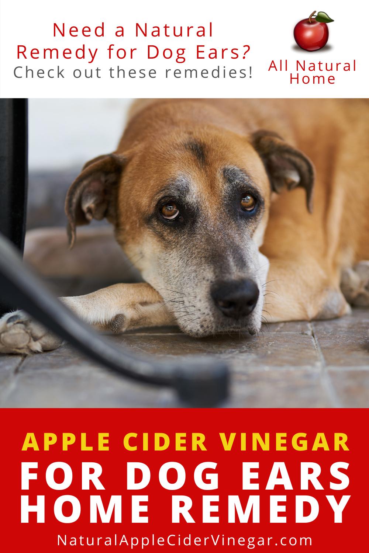 Apple Cider Vinegar for Dog Ears Home Remedy in 2020