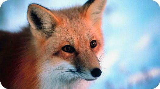 Meaningful Fox Tattoo Ideas