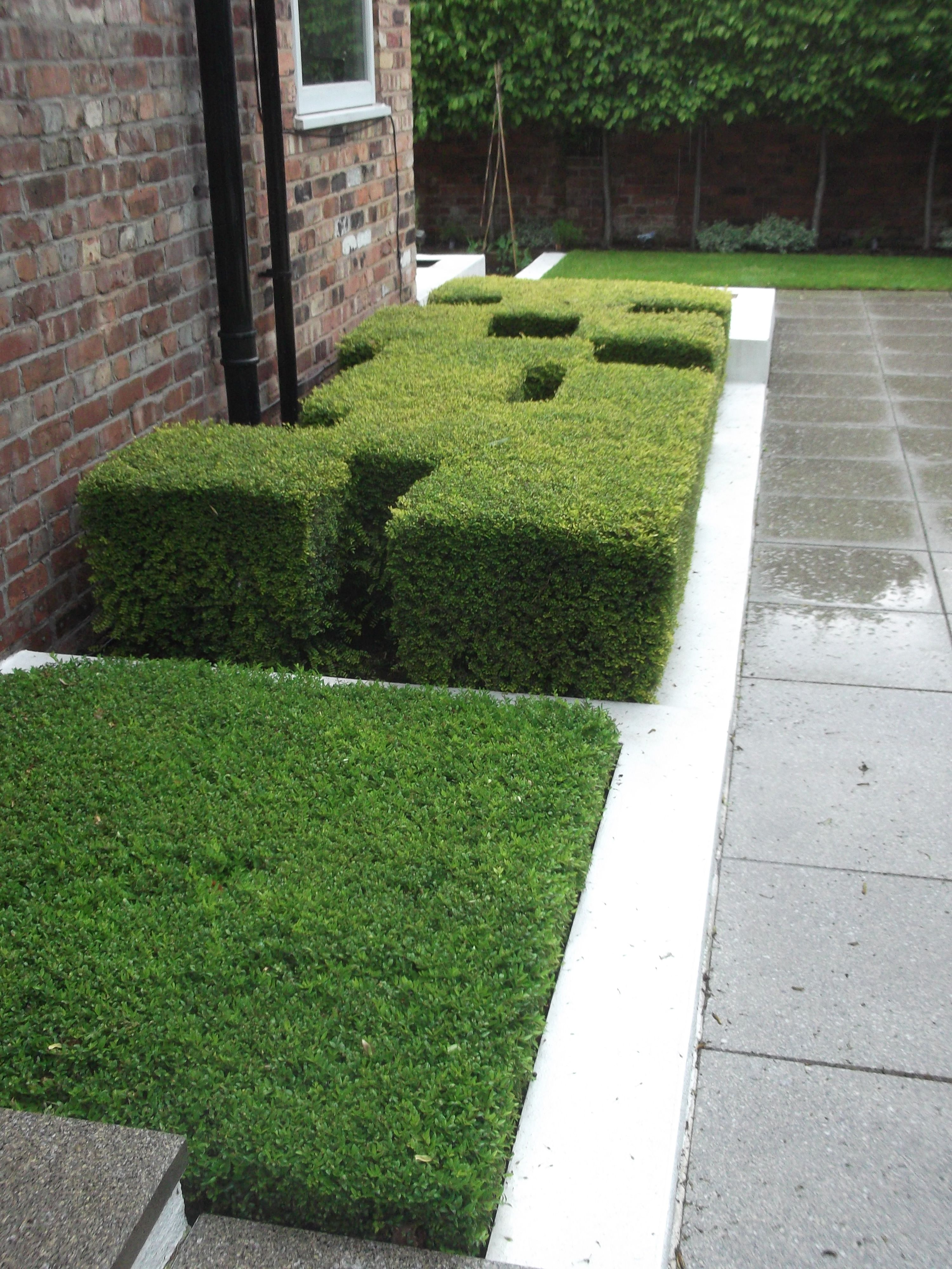 I Used Lonicera Nitida And Very Little Else In This Minimalist Garden In  South Manchester. Charlesworth Design