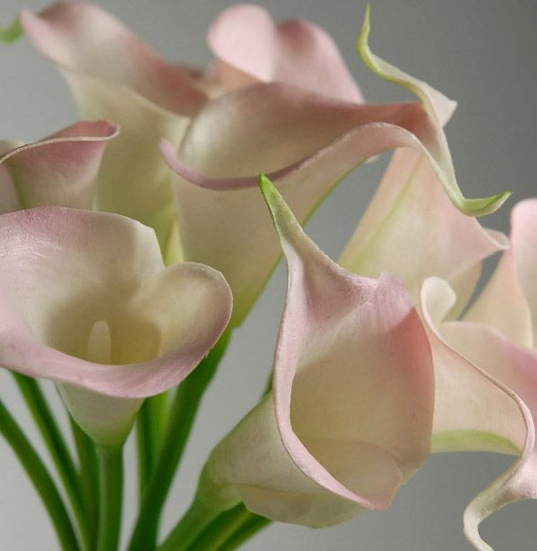 Calla Lily Bouquet Natural Touch Flowers Pink 12 Flowers Pink Calla Lilies Calla Lily Purple Calla Lilies