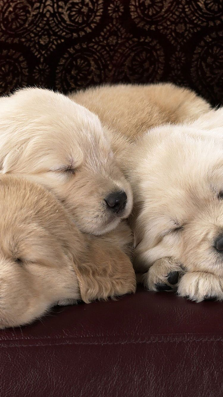 50 HD Dog iPhone Wallpapers Sleeping dogs, Happy dogs