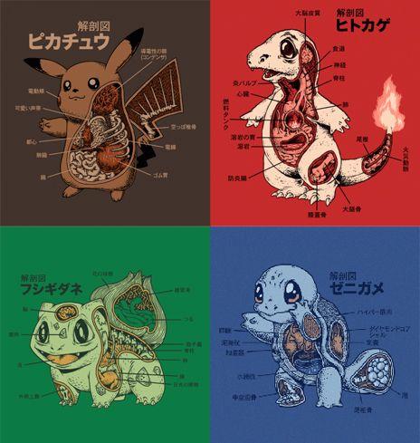Pokemon Pokemon Squirtle Anatomy T Shirt Spot Ezbuy Love These