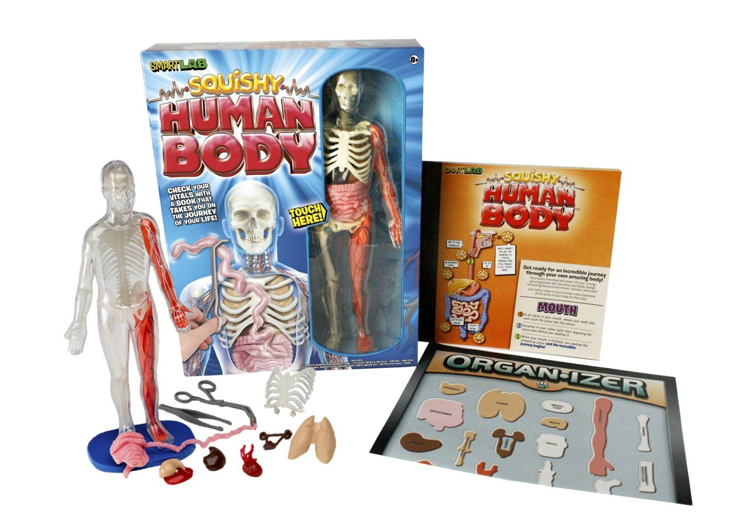 Smartlab Squishy Human Body This Is A Fun And