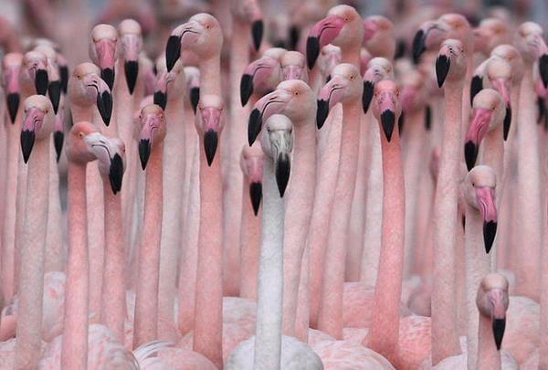 Beautiful Pink Flamingo | pink flamingos