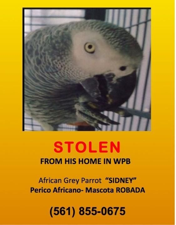 #Parrot stolen during home burglary in #WestPalmBeach FL! Plz RT! @OprahTheWestie