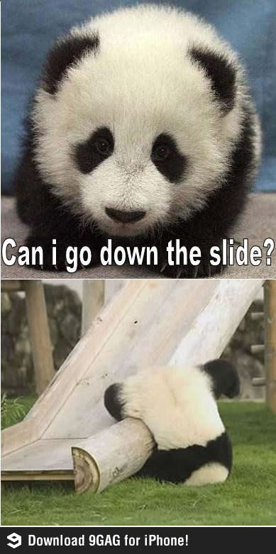 Panda slide panda animal and humour panda slide voltagebd Choice Image