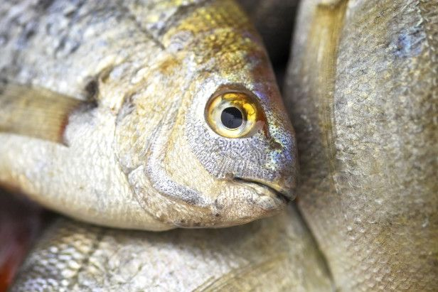 Fish Head Fertilizer Garden Ideas Tips For Growing 400 x 300