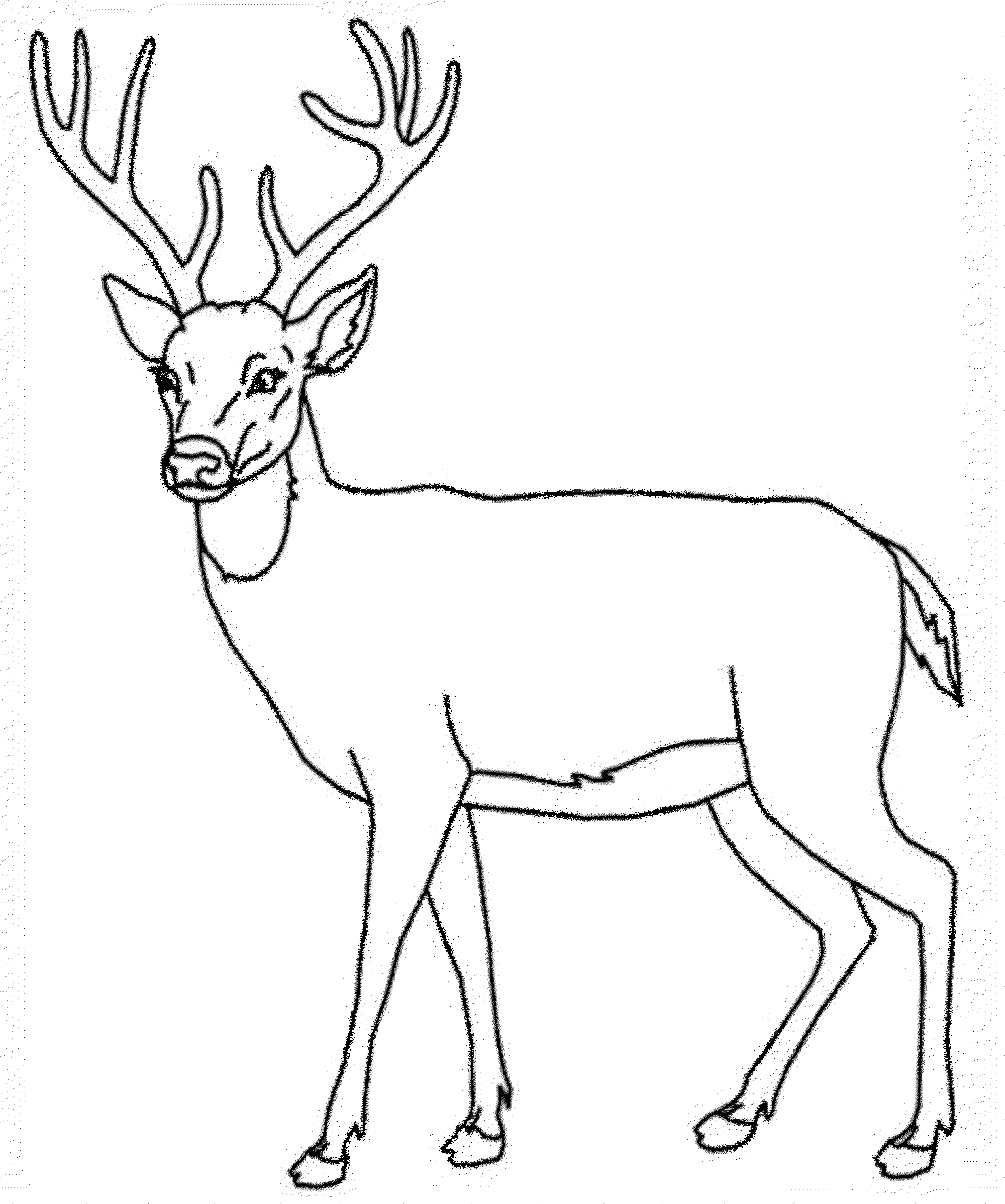 Deer Coloring Pages Kidsuki Adorable Animal Number 2 For Toddlers Polar Bear Witchcraft Page Beautiful Dragon Deer Coloring Pages Deer Drawing Animal Drawings