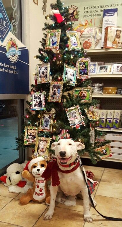 Nmdog Wish Giving Tree For The Forgotten Pupps Make Their Wish Come