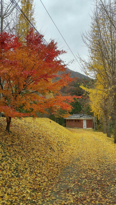 경주 용담골  Korea