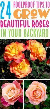 24 Rose Gardening Tips For Beginners To Pros Ultimate Guide Rose Garden Idea Beginn Rose Garden Design Front Yard Landscaping Design Rose Garden Landscape