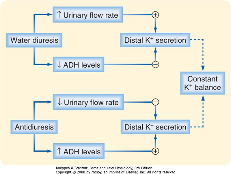 Result For Hormonal Regulation By Adh And Aldosterone Bio. Result For Hormonal Regulation By Adh And Aldosterone. Wiring. Aldosterone Hormone Feedback Loop Homeostasis Diagram For At Scoala.co