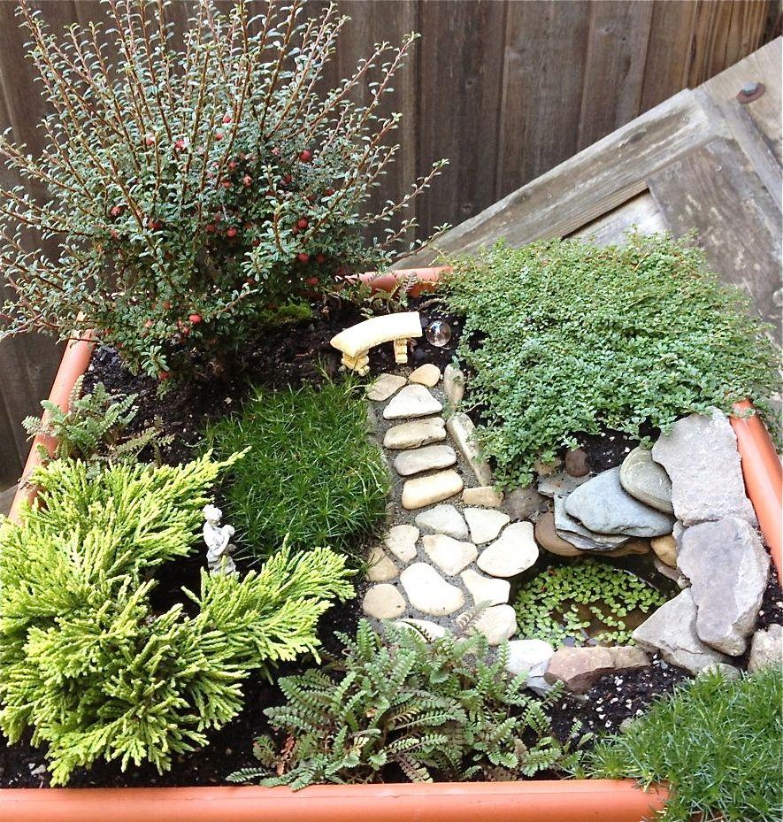 Hauswurz, Pflanzen, Zauberhaft, Dekorieren, Diy Und Selbermachen, Dekoration,  Minigärten, Miniaturgärten, Japanische Gärten