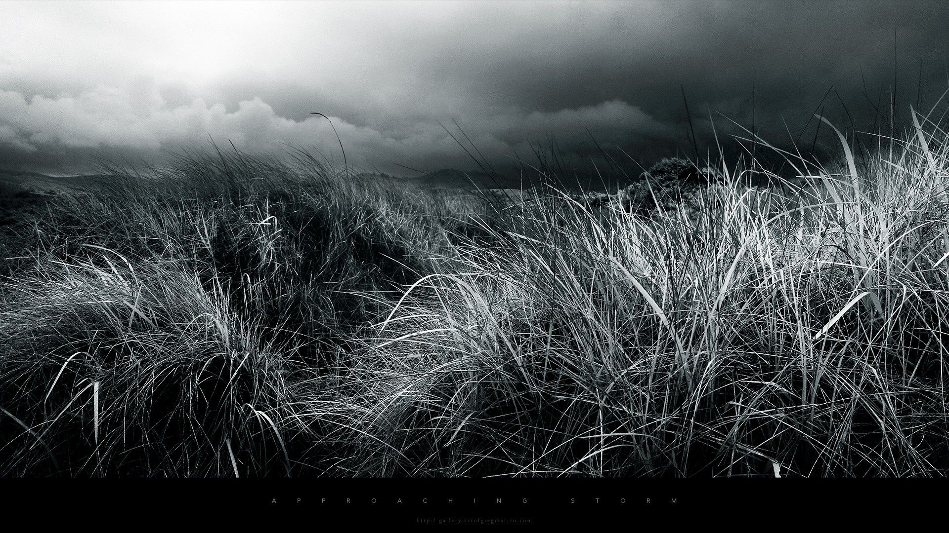 Black And White Nature Photography Abstract 1920x1080