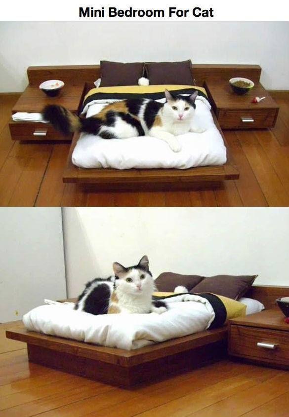 cat bedroom. Ahw  Mini Bedroom for cats pic twitter com 481lHk7DXc Cuteness