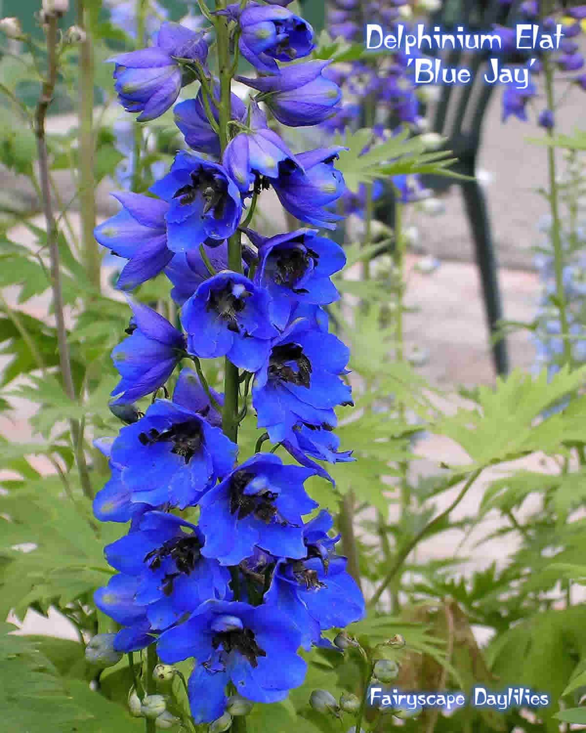 Delphinium Flowers Meanings The symbolic meaning of the delphinium is big hea