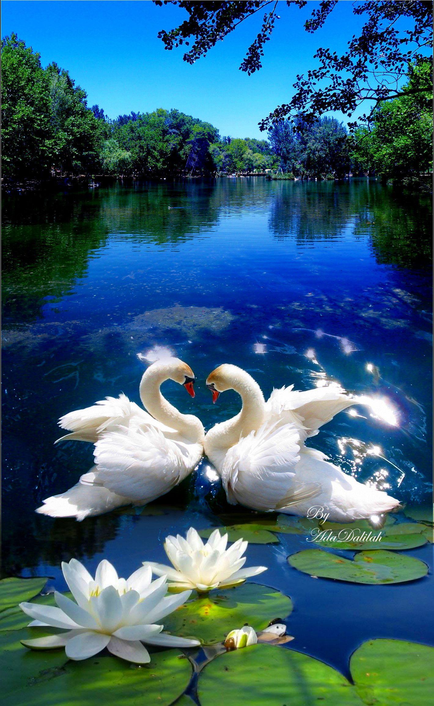 Pin By Llorenc Roviras On Cigne Beautiful Scenery Pictures Beautiful Birds Scenery Pictures