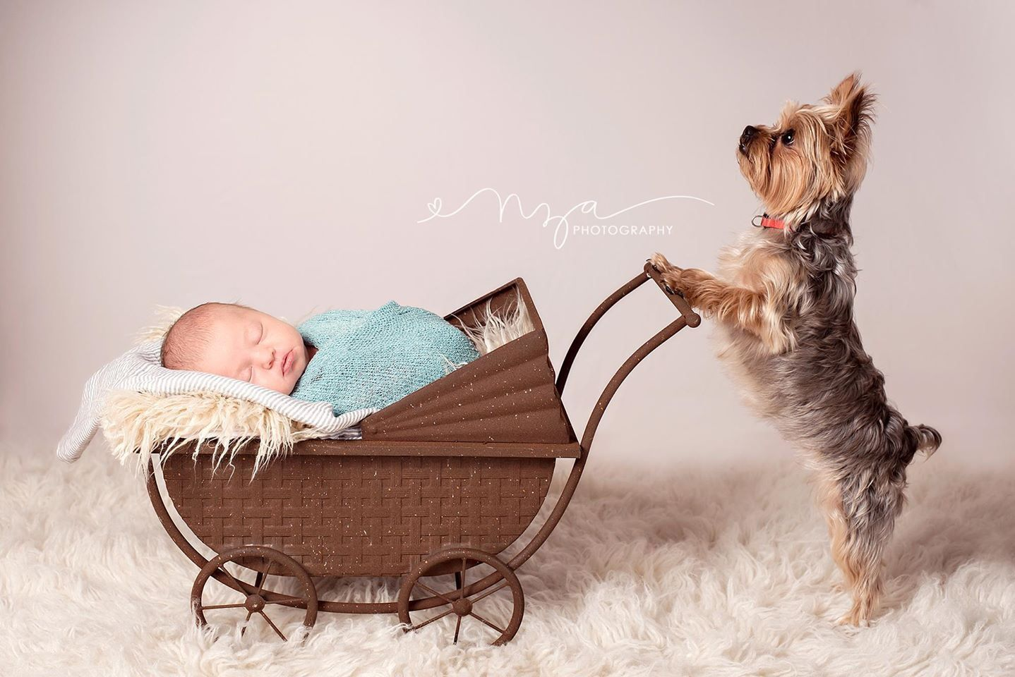 Pin by Photography by Leslie Ann on Newborn Photography