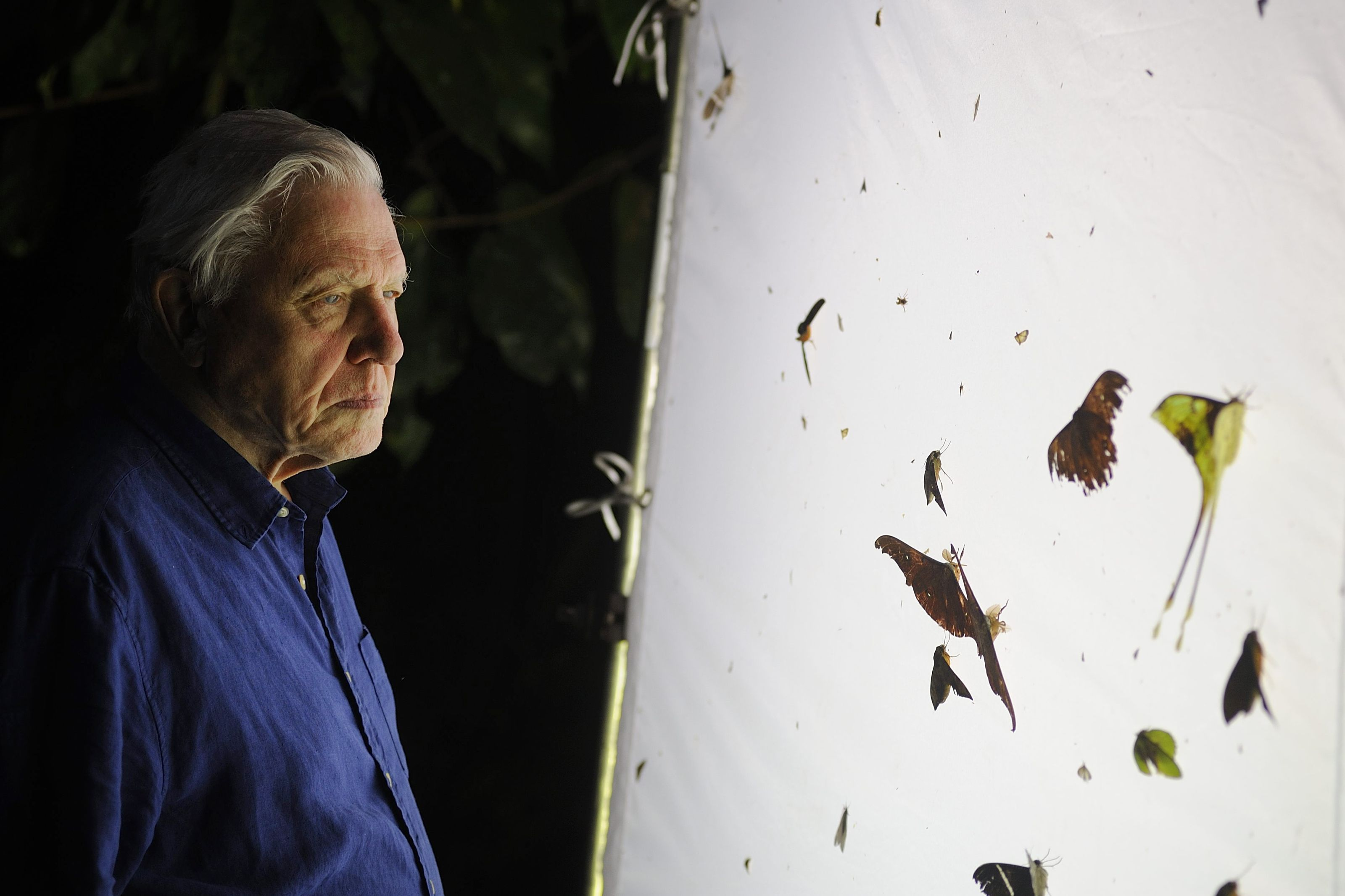 Deep Impact: Attenborough at 88  {Audubon ARTICLE} Never mind old age. David Attenborough still does his own stunts in a lifelong quest to bring wildlife to your living room (or cell phone device)..