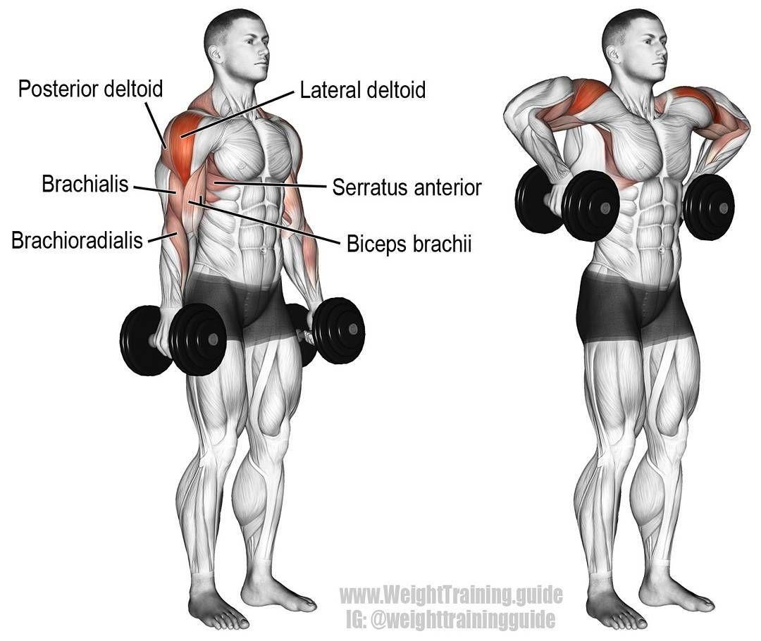 Debuter La Musculation A La Maison Epaules Musculation Exercice