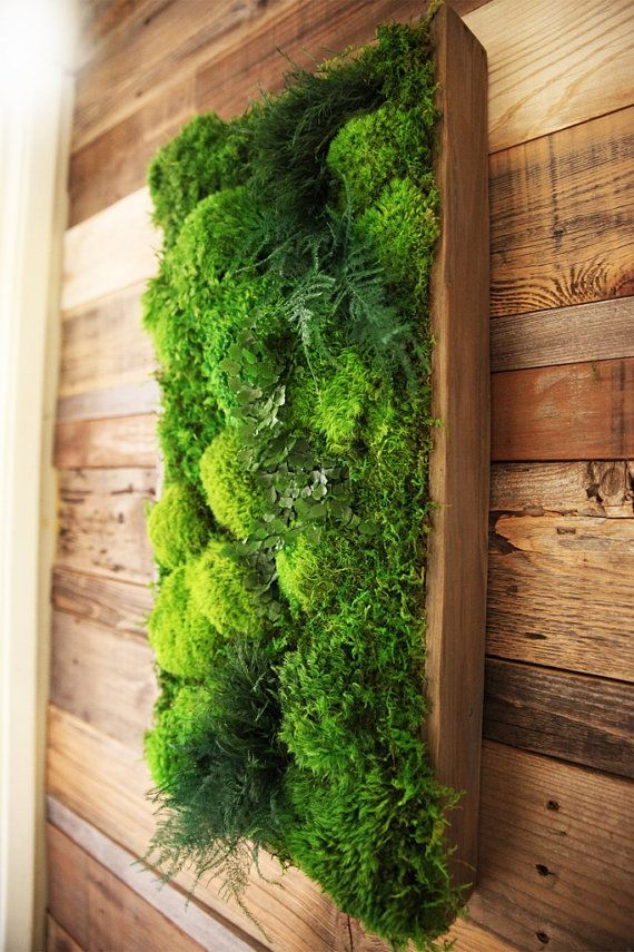 X Artisan MossR Plant PaintingR No Care Green Moss Wall Art Real Preserved Ferns In Reclaimed Wood Frame And Fern