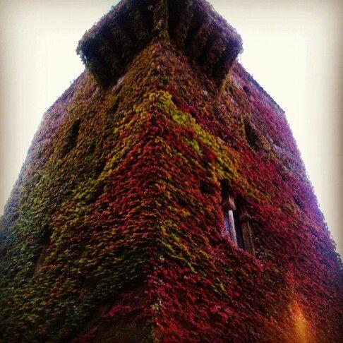 Otoño en la torre de Sande ...Cáceres