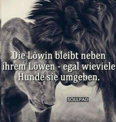 Und der Löwe folgt seiner Löwin💋