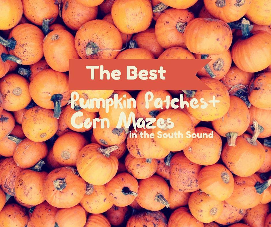 Pumpkin patch and corn maze puyallup lakewood
