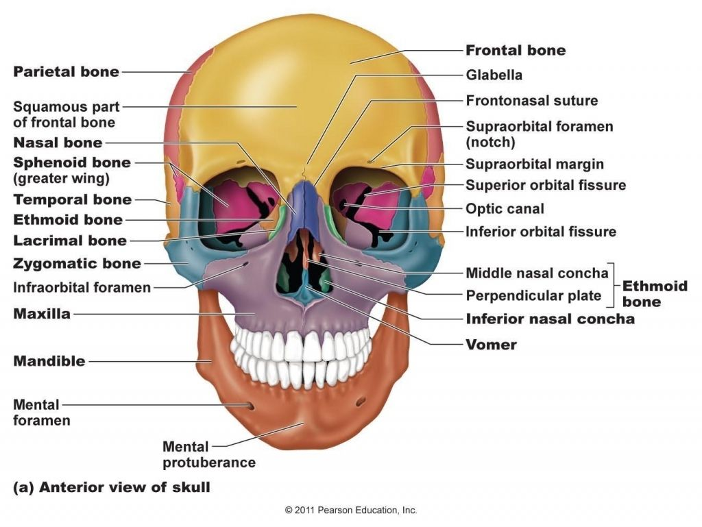 image result for lacrimal bone anatomy skull anatomy. Black Bedroom Furniture Sets. Home Design Ideas