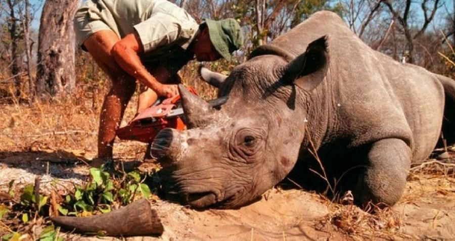 Image of: Big Game Who Are Africas Big Game Hunters And How Do They Justify Killing Endangered Species For Sport Pinterest The Case For And Against Big Game Hunting In Africa Protect The