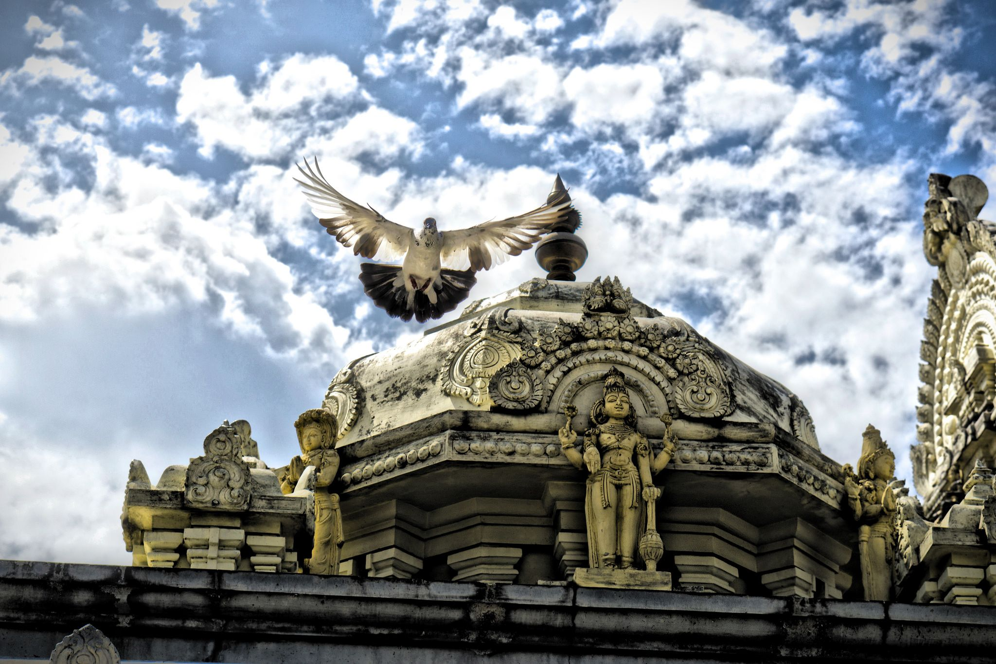https://flic.kr/p/vLCQKT | Free from tranquil | Pigeon flying above temple