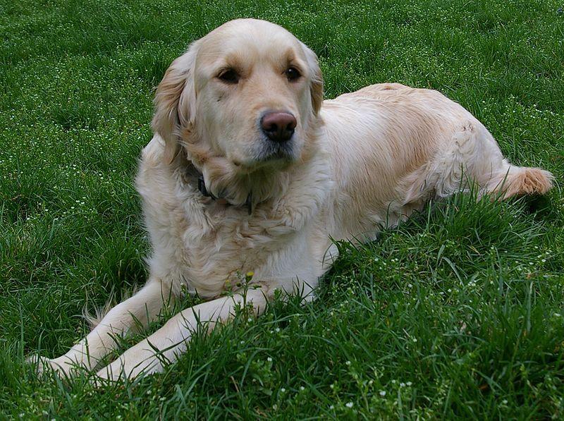 Onko tässä maailman kaunein koiraruno?