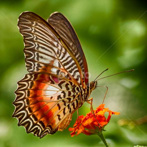 Uber Google Auf Pixoto Com Gefunden Schmetterling Libellen Bilder