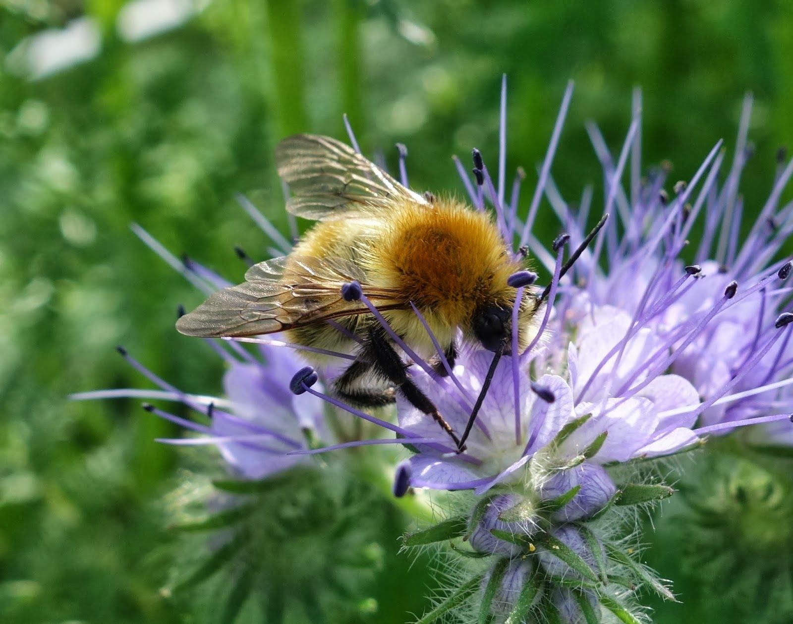 TOP 10 Bug Repelling Flowers That Keep Pests Out of Your Garden ...