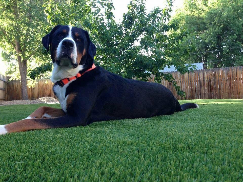 Gallery Turf Pros Solution Artificial grass backyard