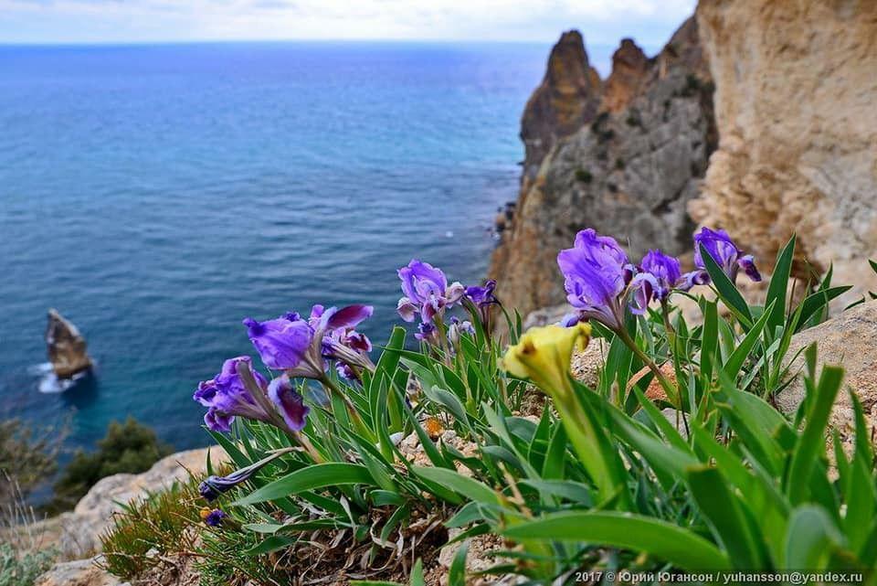 кобзон цветы крыма с картинками санузла полностью