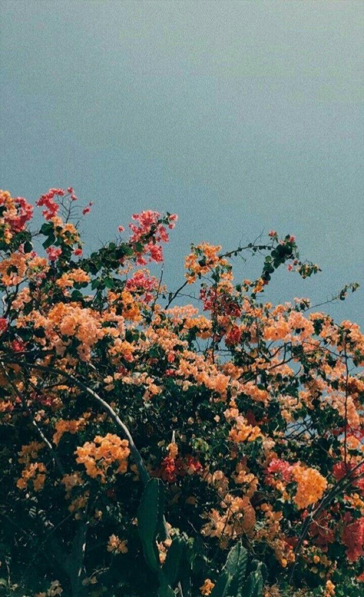 Paige Byers Flower Aesthetic Flower Wallpaper Tumblr Wallpaper