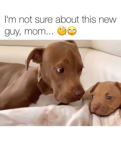 Mommy who's the new guy ? #cutepuppies