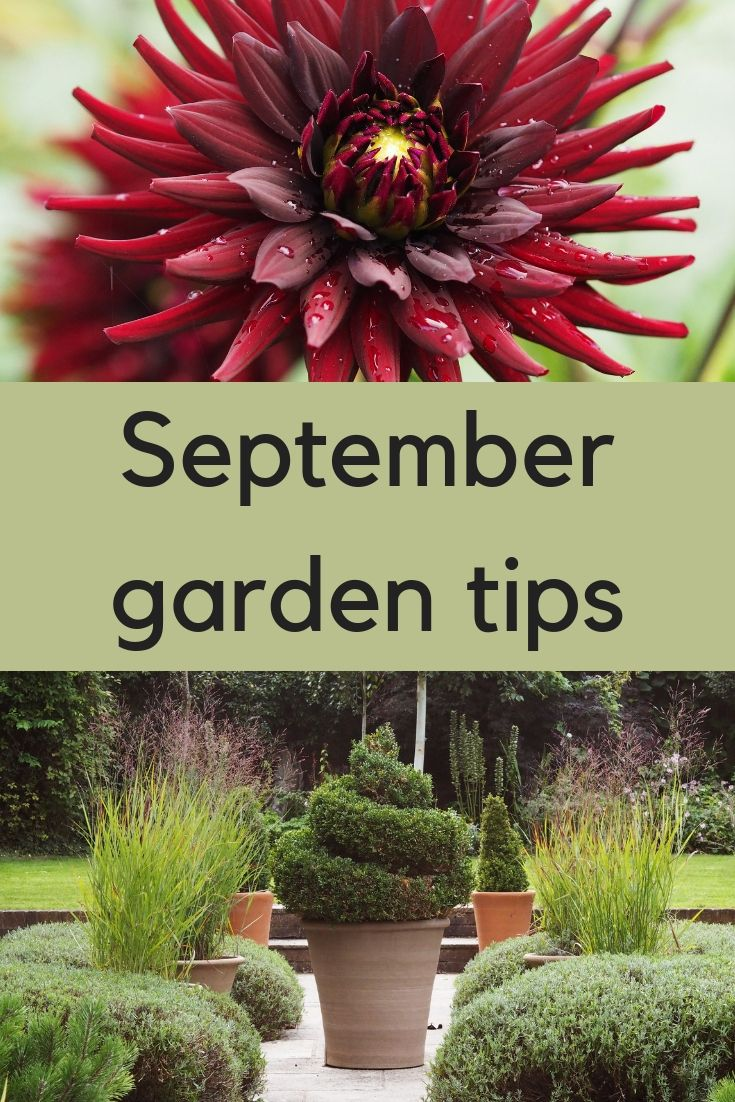 Do you make these September garden mistakes is part of garden Decking How To Make - Your September garden can be full of colour and contrast  but are you making these six mistakes  Tips on how to make the most of the September garden