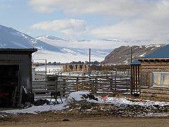 Rollin's barnyard near Dell, Montana