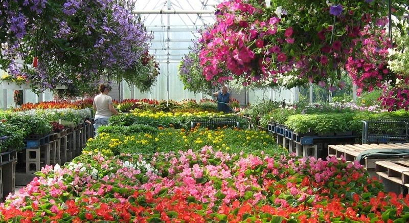 Greenhouses Near Me Find The Best Greenhouses Near You 2019