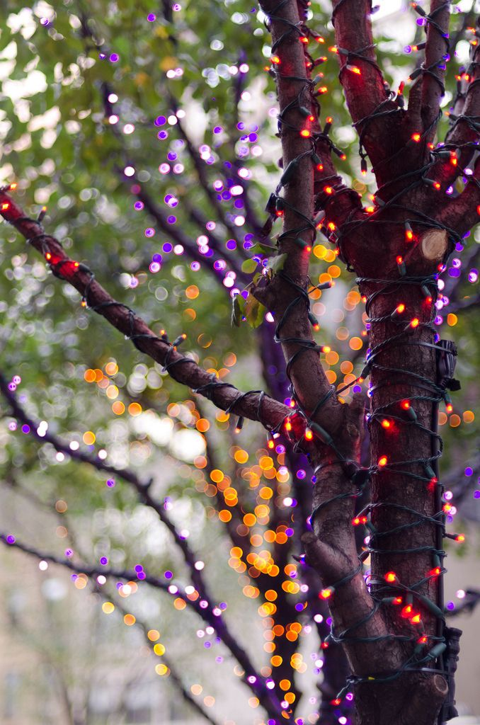 use different colored lights in trees:    Purple and Orange