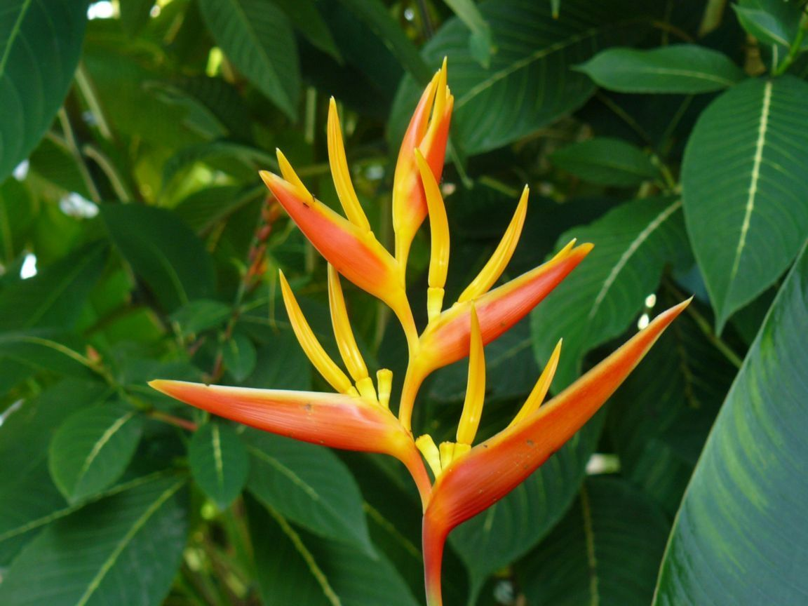 One Of The Many Tropical Flowers Click To See Full