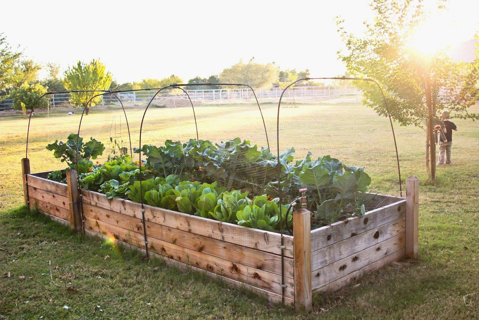 Diy raised gardens for your home diy raised gardens pinterest