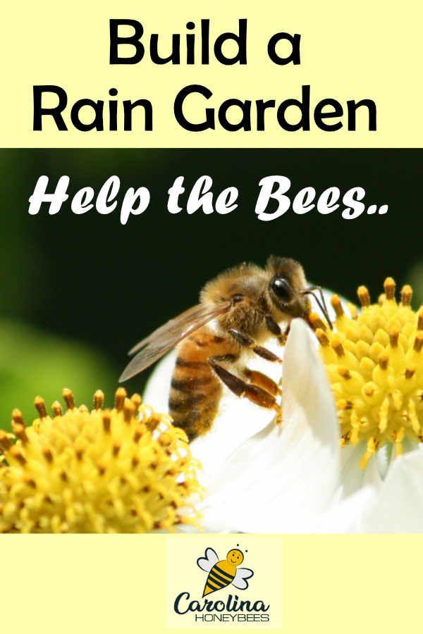 Increase Bee Habitat With Rain Gardens   Bee friendly ...
