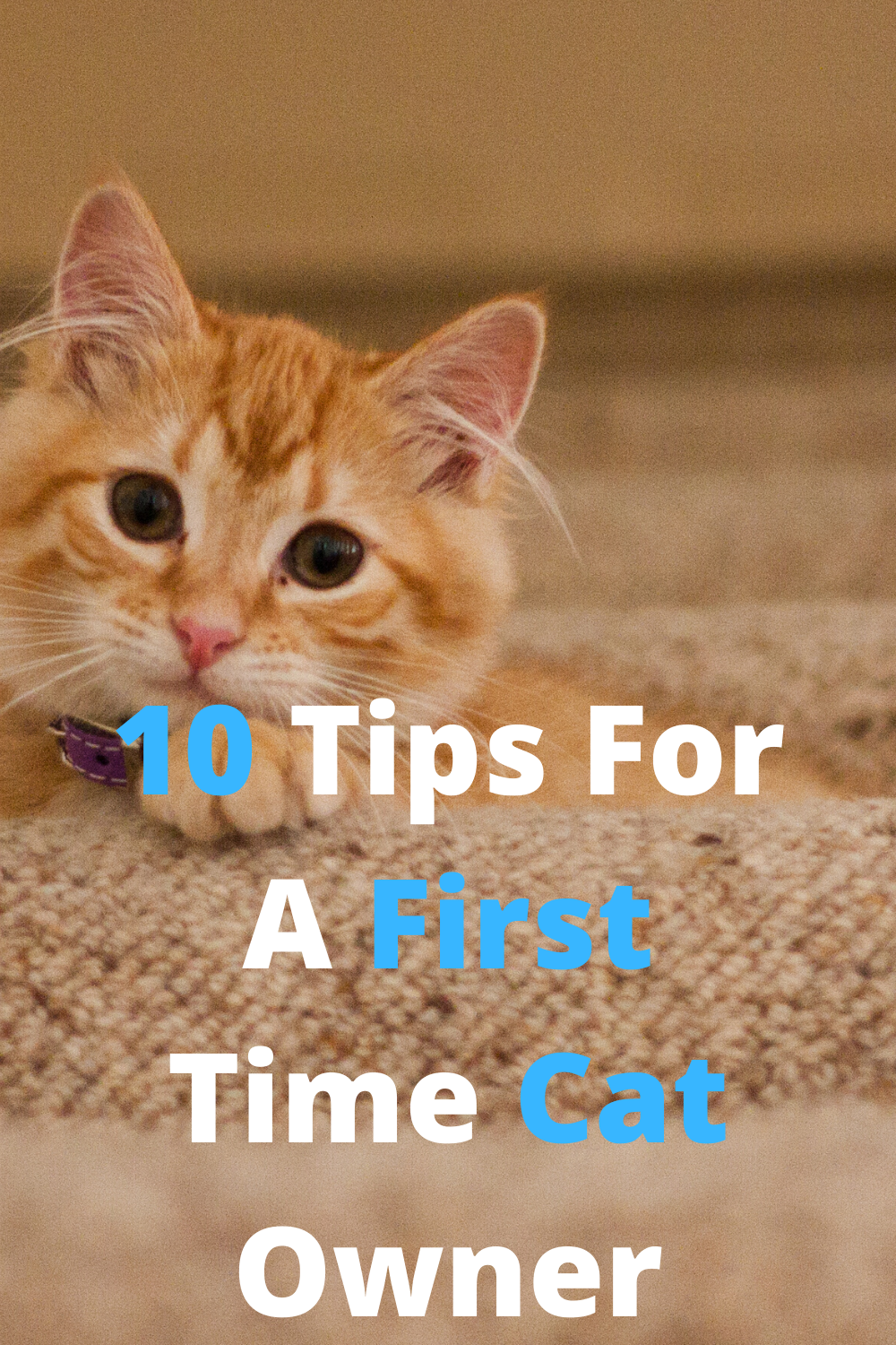 Caring For A Cat Ultimate Guide In 2020 First Time Cat Owner Cats Cat Owners