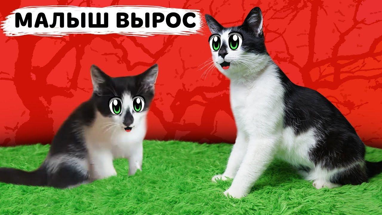 КАК РОС КОТ МАЛЫШ ! МАЛЕНЬКИЙ КОТЕНОК МАЛЫШ и как Кошка ...