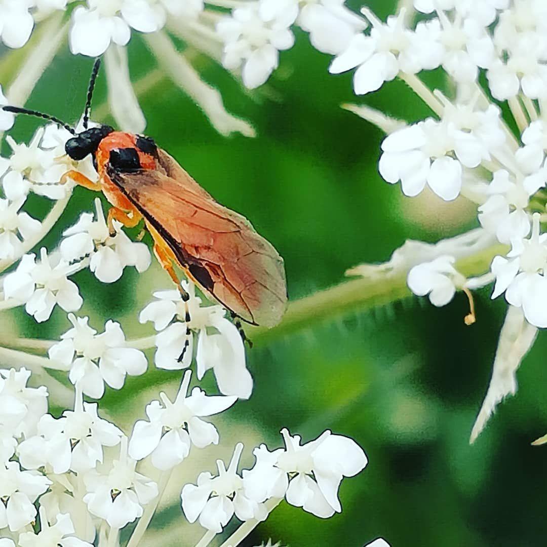 Landschaftsfotografie Nature Insekten Blumen Kafer Garten Landschaftsfotografie Garten Blumen