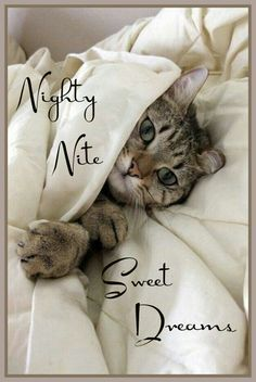 Good night, Sweet dreams and Night on Pinterest   Good night greetings,  Good night cat, Good night love quotes