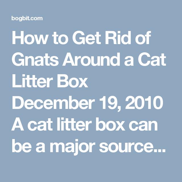 Gnats In Litter Box | Tyres2c